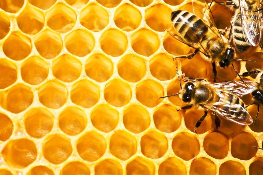 Honeycomb-random-32405548-1200-800.jpg