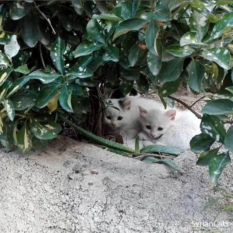 gatos dam1