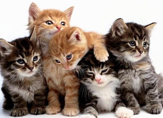 los-gatitos-felices-web.jpg